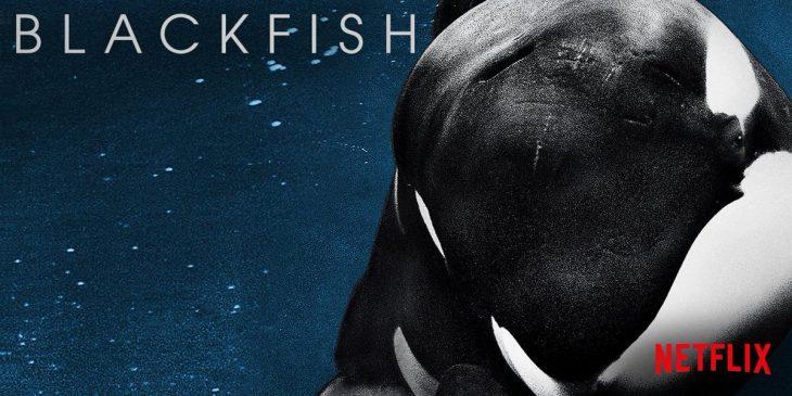 Documentales en Netflix que te darán escalofríos, Blackfish
