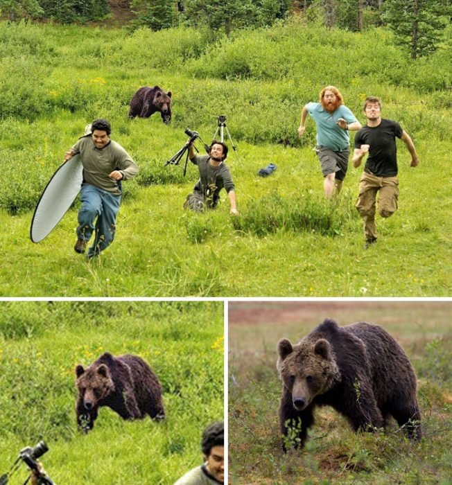 oso corriendo a través del bosque