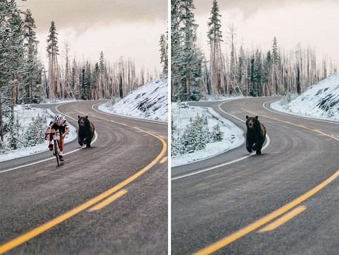oso corriendo en carretera