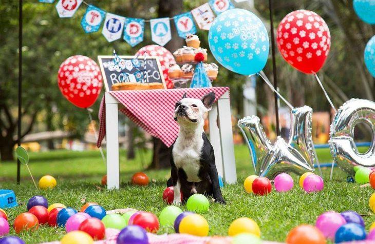 perro en sesion de fotos de cumpleaños