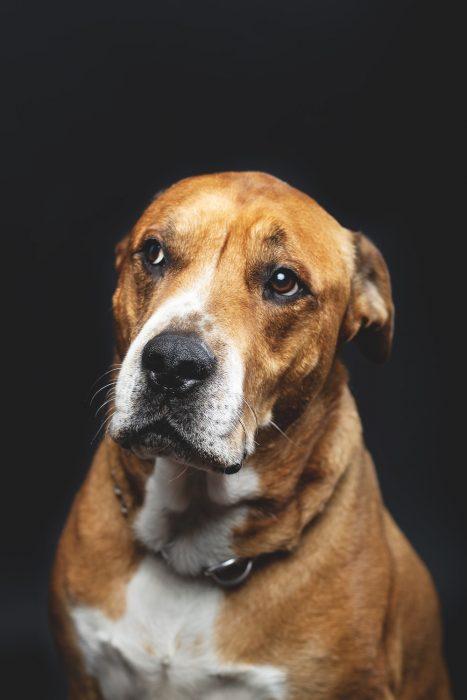dog with suspicion gesture