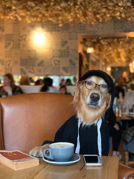 Perro labrador fotografiado en diferentes situaciones
