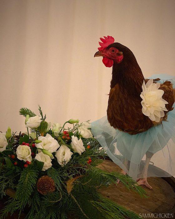 gallina cafe flores y falda azul de tul