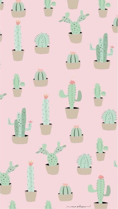 Fondo para celular, wallpaper bonito de cactus en macetas con fondo rosa