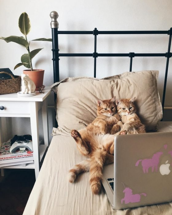 Gatos viendo las noticias recostados