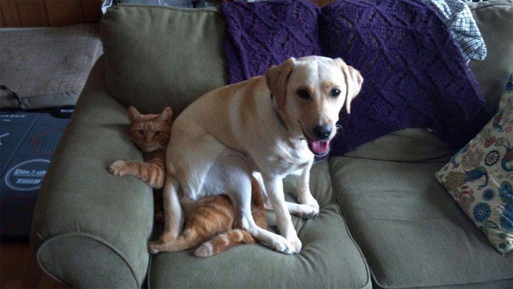 Gato sentado en el sofá