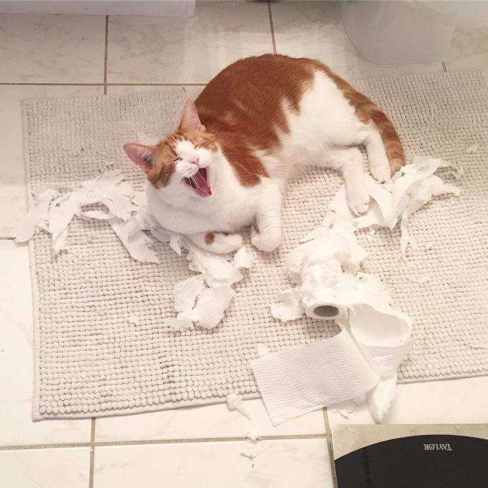 Gato maullando en el piso