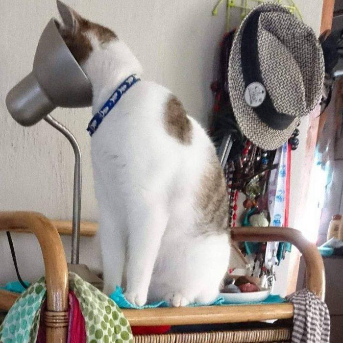Gato mirando por una lampara