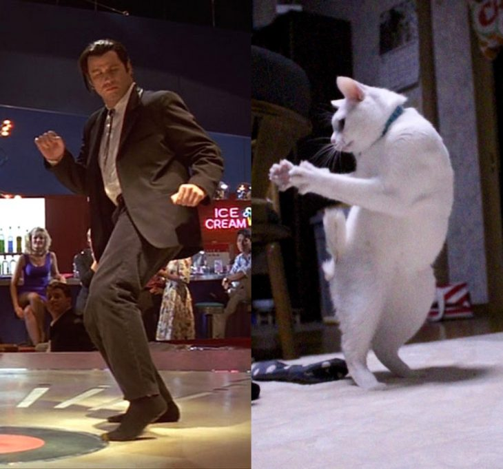 Gato bailando en dos patas