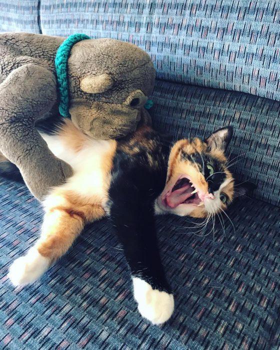 gato luchando con un peluche