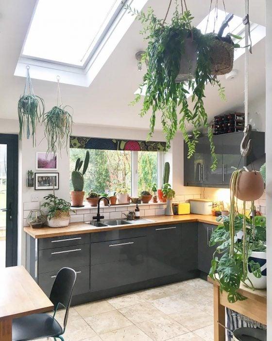 Cocina de una casa con gabinetes de color gris y decorada con plantas de diferentes tipos que cuelgan en el techo y se encuentran colocadas en el ventanal