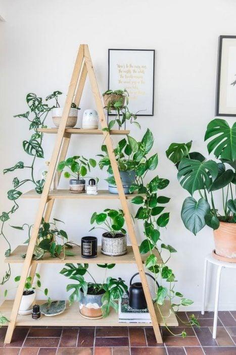 Tarima de decoración que tiene plantas desde el primer escalón hasta el último, ideal para habitaciones que reciben luz natural