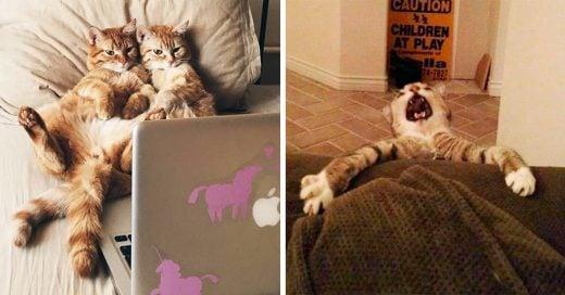 14 Lindos gatitos que no conocen los límites y viven al máximo