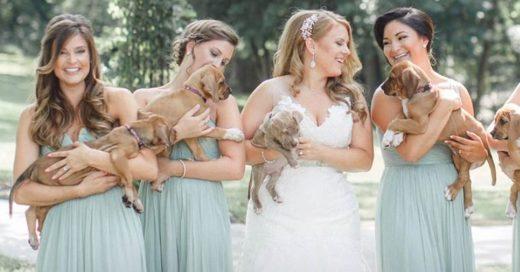 COVER Damas de honor llevan cachorros sin hogar en vez de ramos de flores