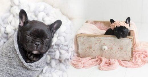 COVER Este cachorro tuvo la mejor sesión de fotos por su nacimiento y es adorable