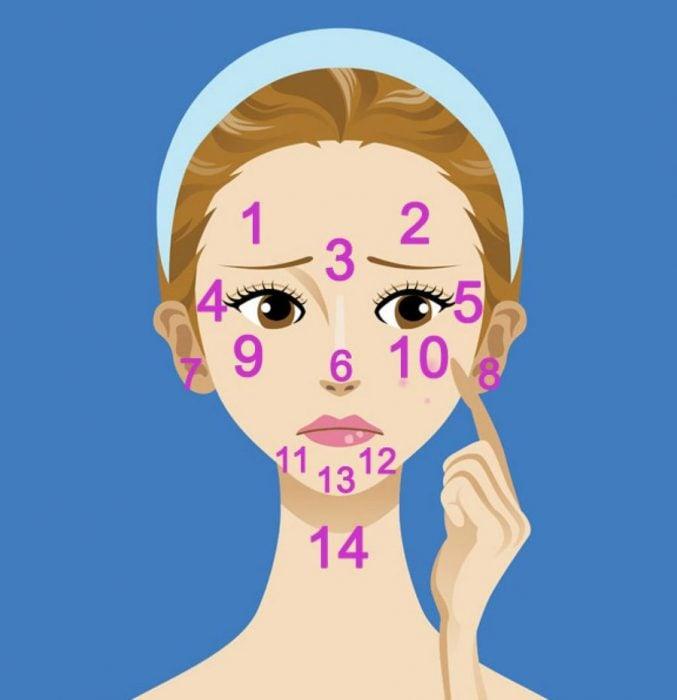 Dibujo animado de rostro femenino con las zonas del rostro marcadas