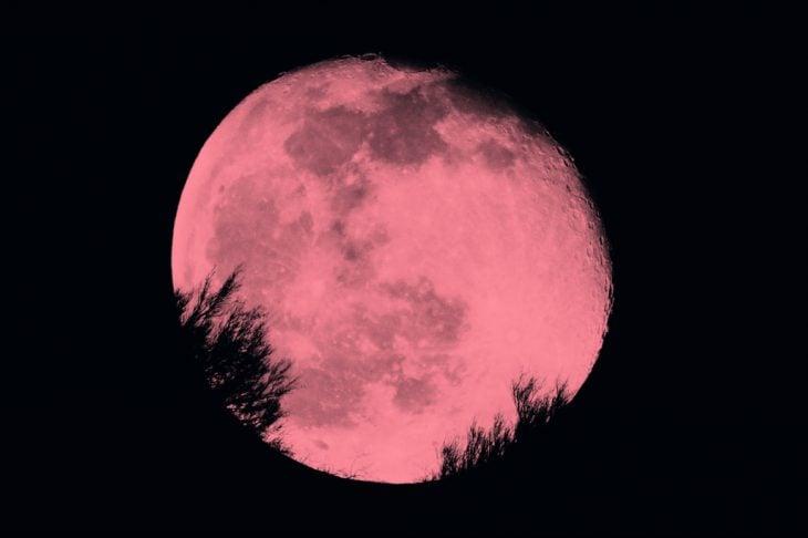 Fotografía de la Luna Rosa sobre un bosque lleno de arboles