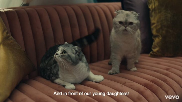 Dos gatos sobre un sillón en el nuevo video musical de Taylor Swift ME