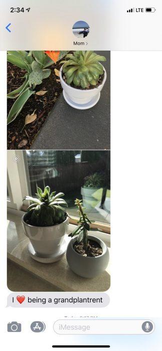 Hija pide a mamá que cuide sus plantas, suculentas en la ventana para que les dé el sol