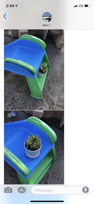 Hija pide a mamá que cuide sus plantas, suculentas en una resbaladilla para niños pequeños