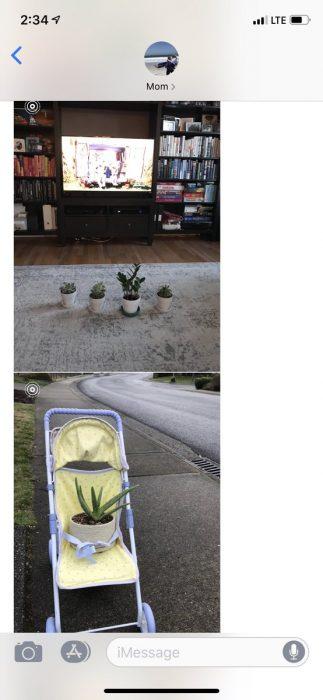 Hija pide a mamá que cuide sus plantas, suculentas viendo la televisión y paseando en carriola amarilla