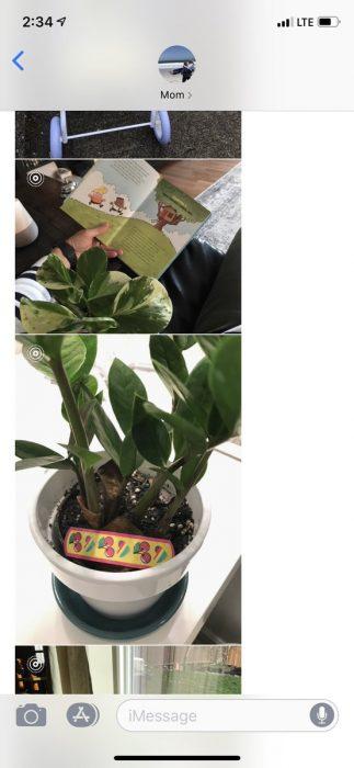 Hija pide a mamá que cuide sus plantas, abuela leyendo un cuento a maceta y planta con un curita de cerezas