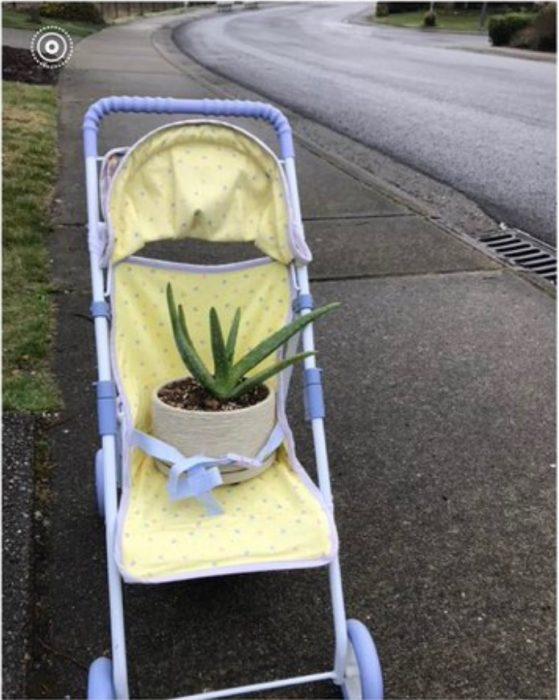 Hija pide a mamá que cuide sus plantas, sábila en maceta blanca en una carriola amarilla con lila