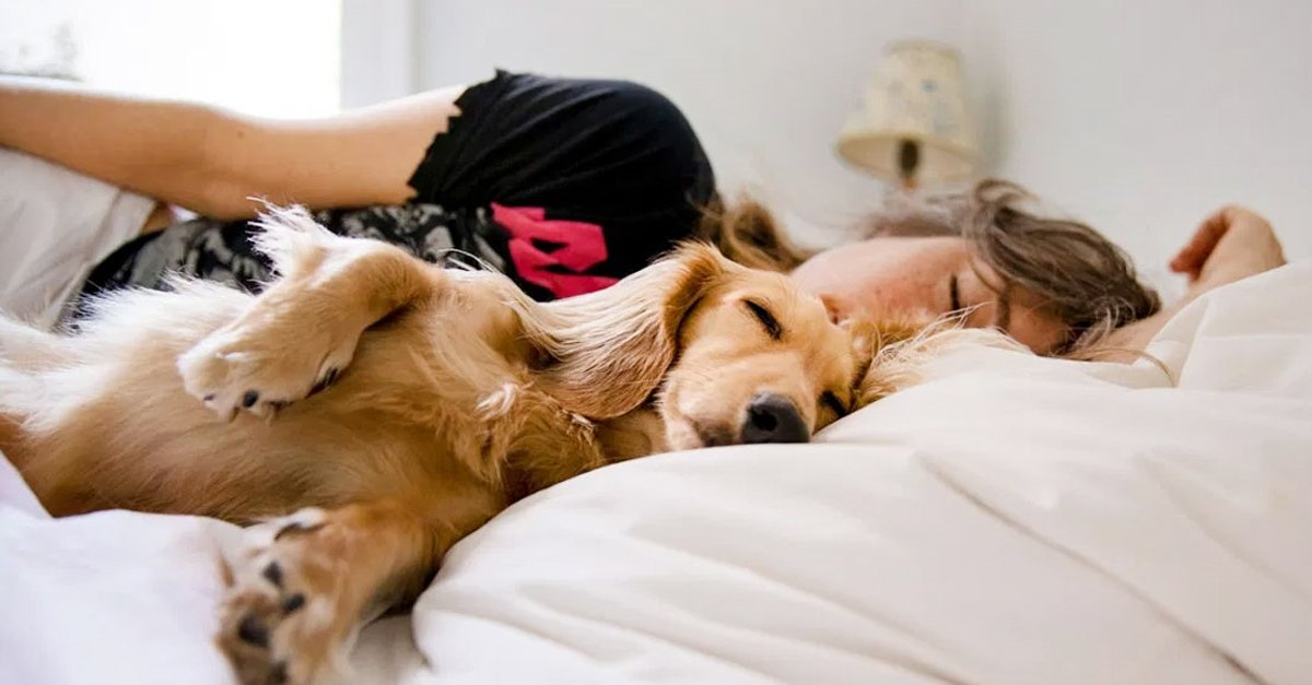 Mujeres duermen mejor con su perro que con su pareja: estudio