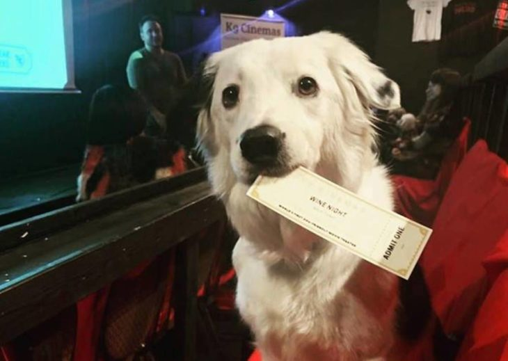 un perro en la sala de cine sostiene con su hocico el ticket de entrada