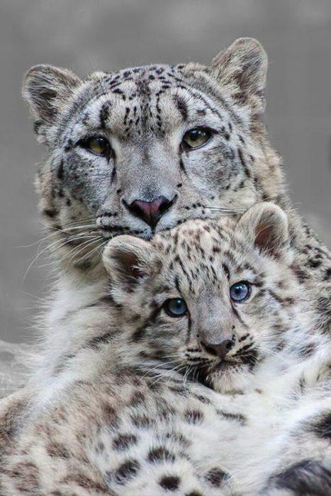 Una madre leopardo con su cachorro viendo a la cámara