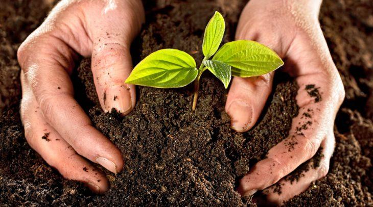 Hombre acomodando la tierra de una planta recién sembrada
