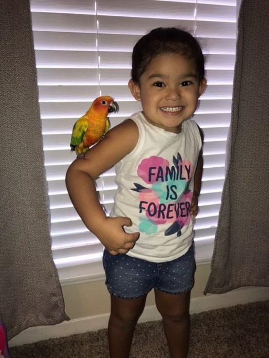 Niña entrena a su ave para atacar cuando ella grita, pequeña con perico anaranjado en su hombro estilo pirata