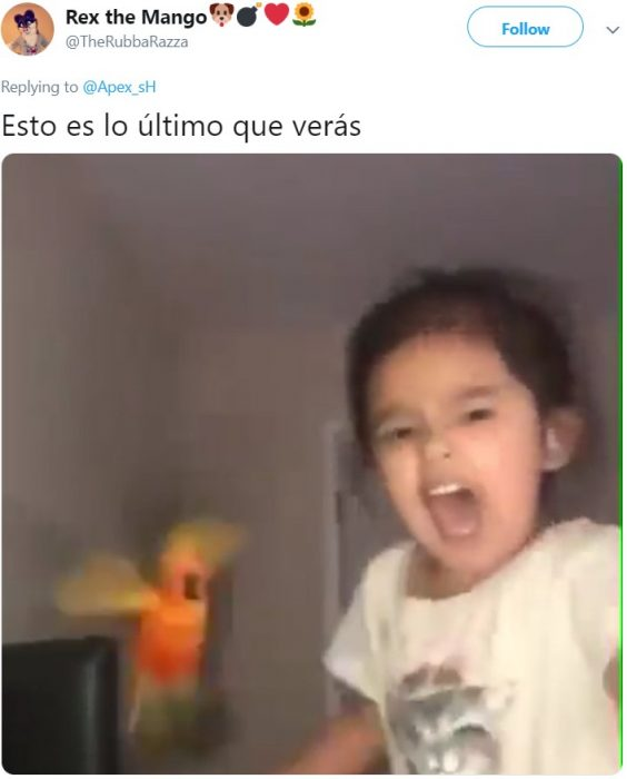Niña entrena a su loro anaranjado para atacar cuando ella grita