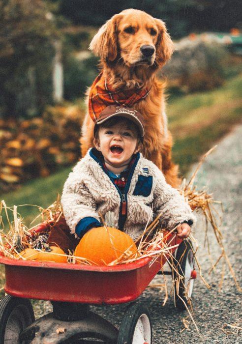 Cosas graciosas que dicen los niños; niño en una carreta con calabazas, empujado por un perro labrador dorado