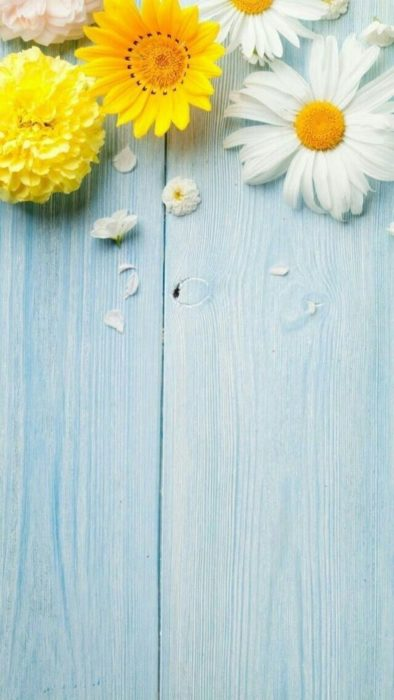 Cute Wallpapers for Phone with colorful daisies