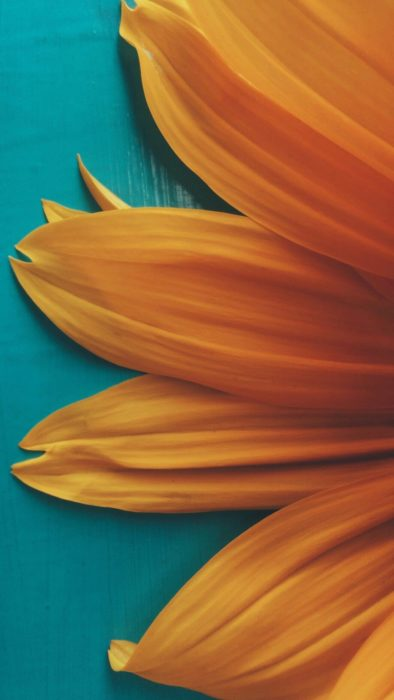 Wallpaper de naturaleza para celular; fondo de pantalla de los pétalos de una flor amarilla vista de cerca