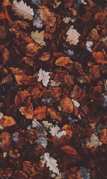 Wallpaper de naturaleza para celular; fondo de pantalla de otoño, hojas secas amontonadas