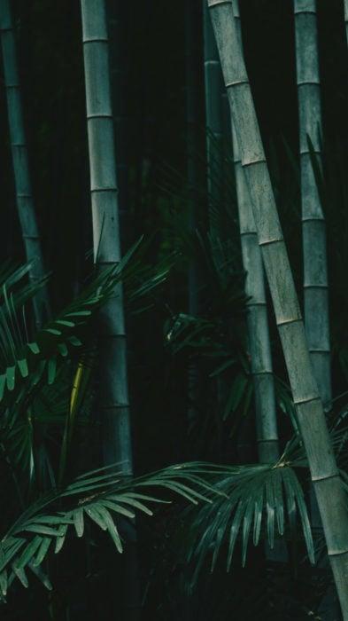 Wallpaper de naturaleza para celular; fondo de pantalla de bambú con hojas verdes de helechos
