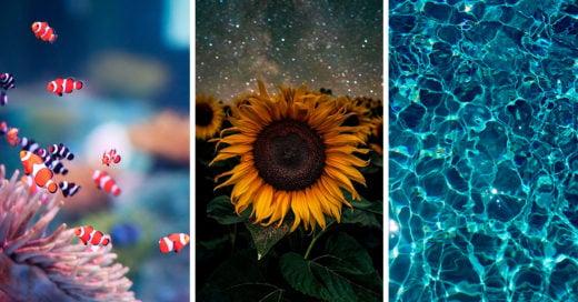 17 Fondos de pantalla para celular que te conectarán con la naturaleza