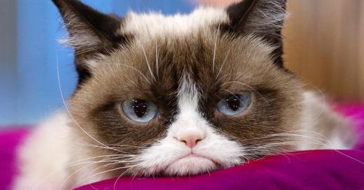 Murió 'Grumpy Cat', la famosa gata de los memes