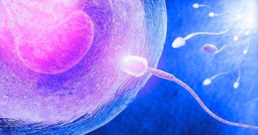 Estudio revela que es el ovulo el que elige el esperma y no al revés