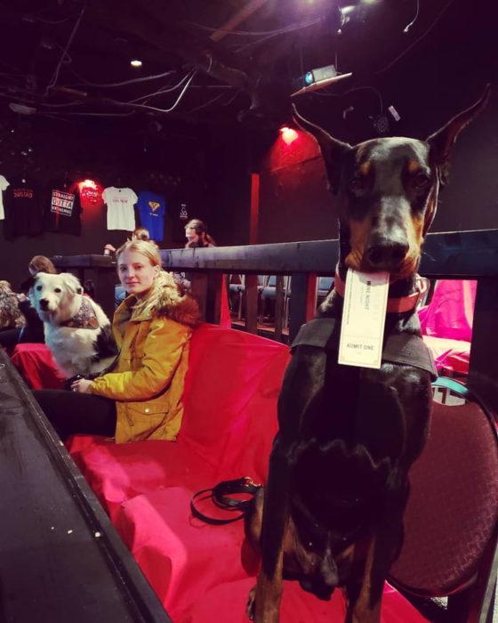 Doberman con ticket en su hocico en una sala de cine