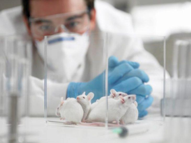 un hombre con cubre boca observa a varios ratones en un laboratorio