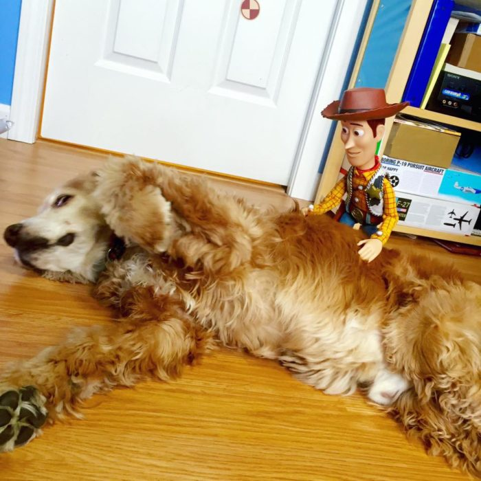 Morgan y Mason McGrew, hermanos crean version stop motion de película Toy Story 3 de Disney Pixar; Woody con perro golden retriever dorado