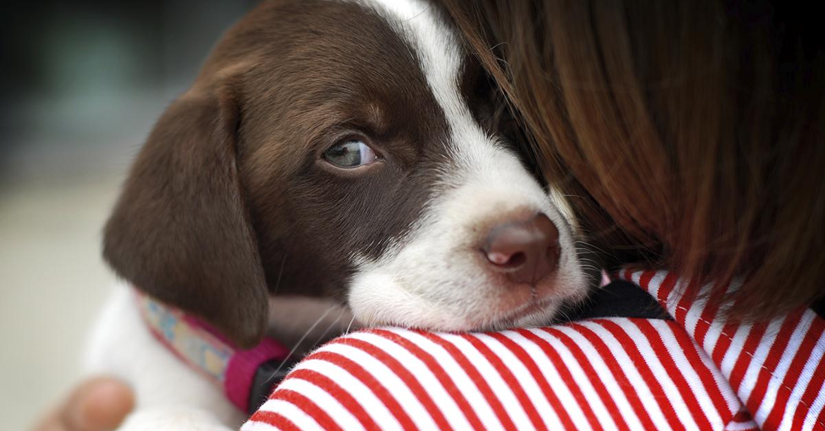 ¡Cuidado! Puedes contagiar de estrés a tu perro