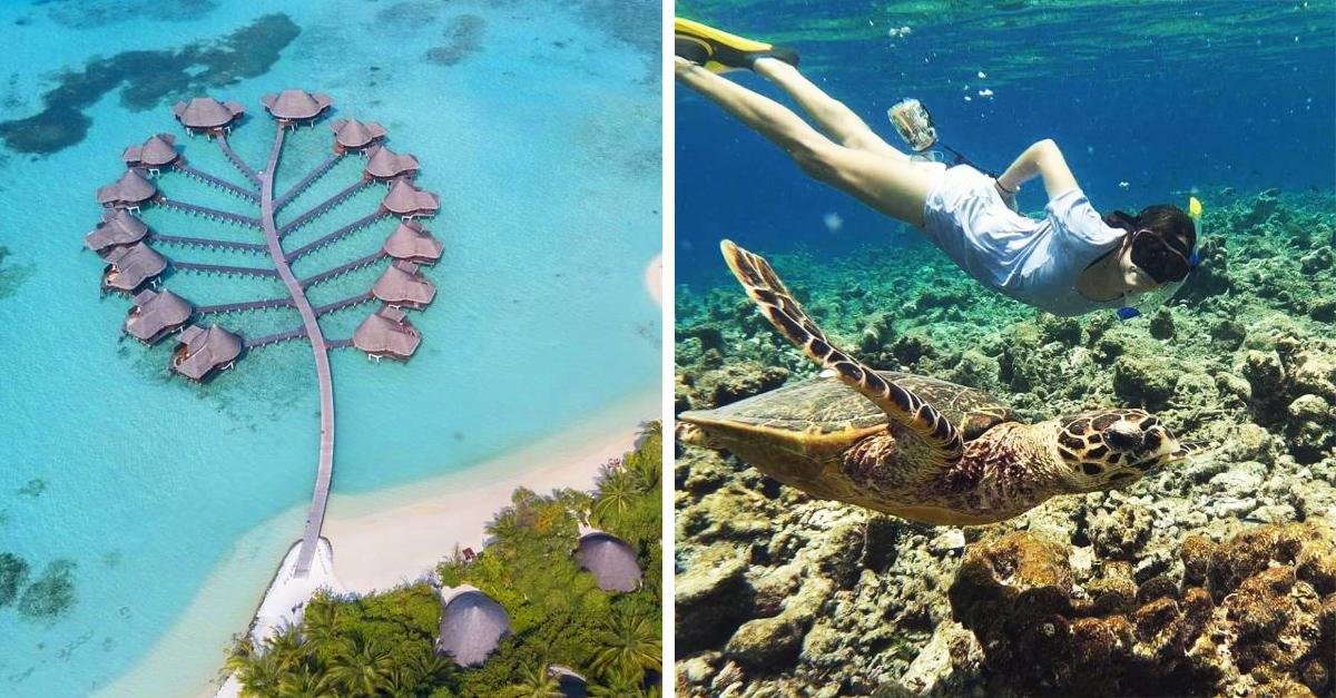 Hotel en Maldivas está en busca de pasantes que amen las tortugas