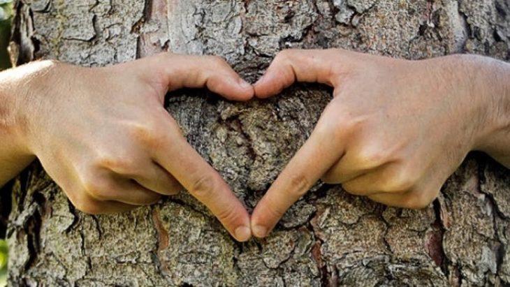 unas manos forman un corazón sobre la corteza de un árbol