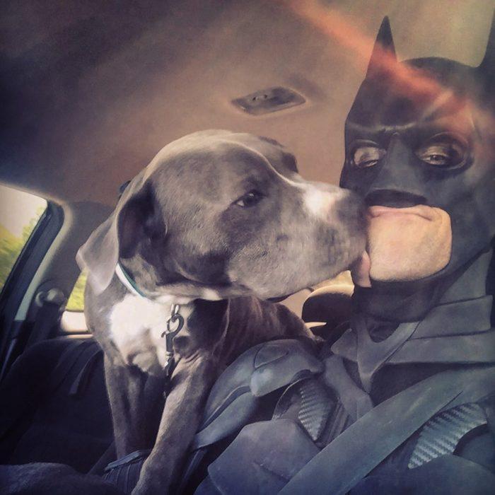 Chris Van Dorn se disfraza de batman para rescatar animales; perro pitbull gris con blanco lamiendo rostro de persona