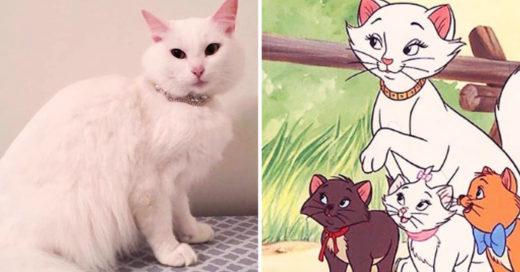 Rescataron a una gata y la llamaron Duquesa, después dio a luz a los aristogatos