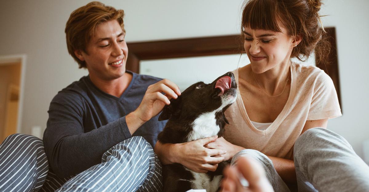 El 86% terminaría una relación con quien no acepte a su perro